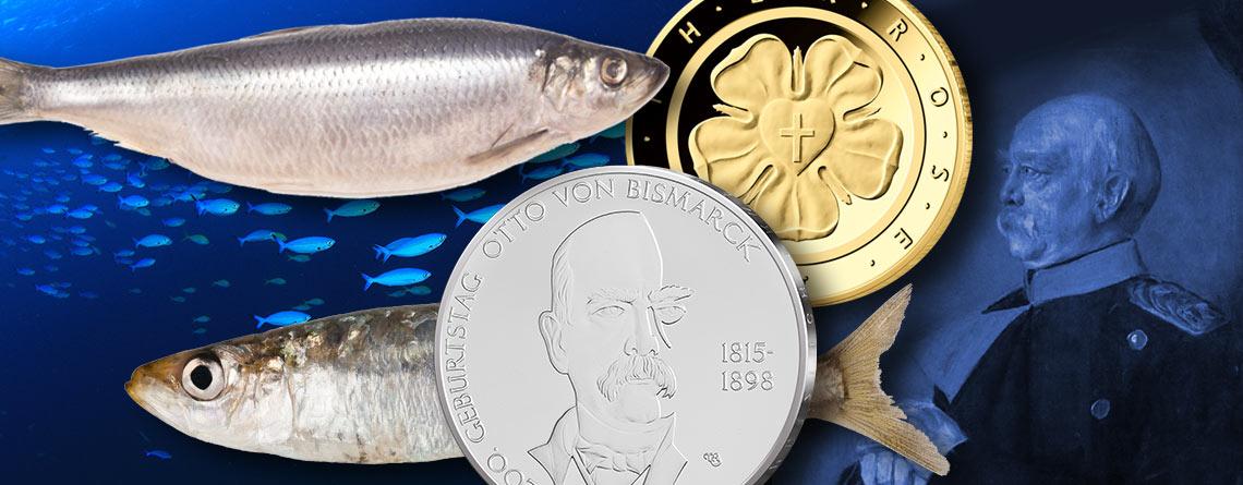 Bismarckheringe im Bodensee gedeihen prächtig - von Fischen & Münzen