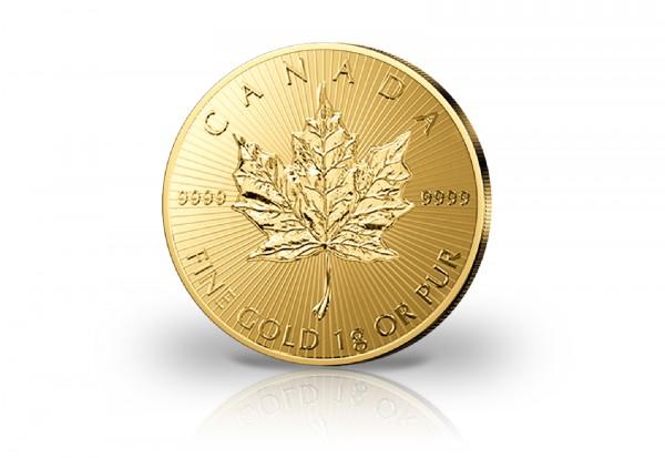 Kanada 1 Gramm Gold Maple Leaf