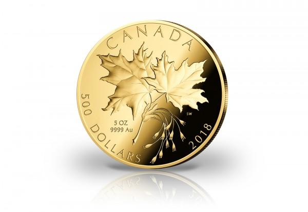 Maple Leaf 5 Oz 2018 Kanada Pp Münzen Gold Edelmetalle Primus